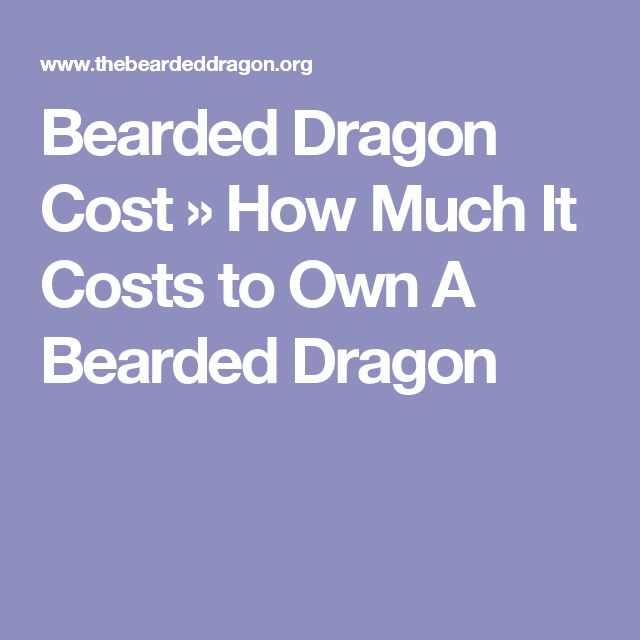 Bearded Dragon Cost » How Much It Costs to Own A Bearded Dragon