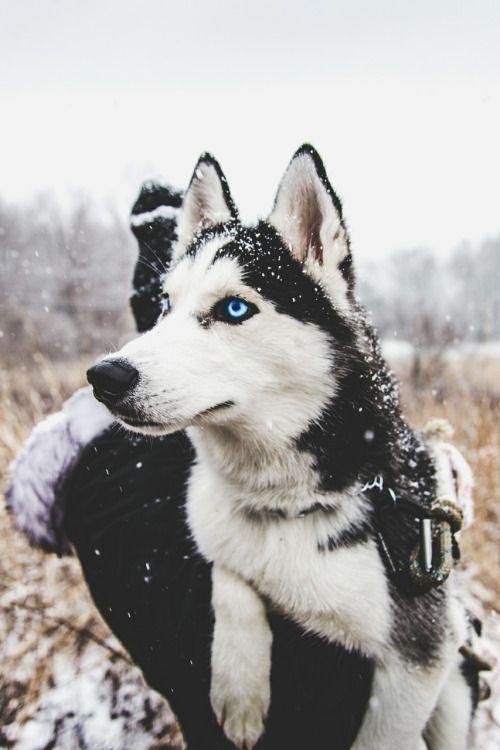 ★ ★ ★  Winter Wonderland | #MichaelLouis - www.MichaelLouis.com