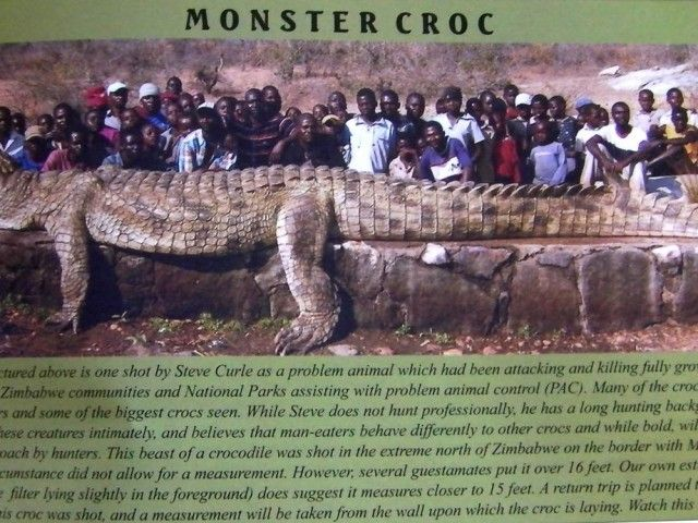 12 best images about ANIMAUX on Pinterest | Animaux, Crabs ... World Largest Animal Ever Recorded
