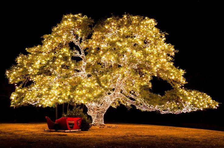 1000 images about texas hill country christmas on pinterest texas