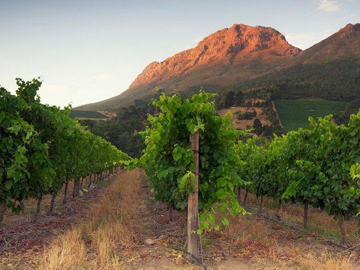 http://www.go2global.co.za/listing.php?id=2242&name=Aaldering+Vineyards+%26+Wines