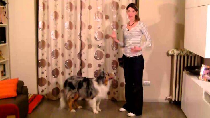 Addestramento/Educazione cani n°6 - Come insegnare l'INCHINO | Qua la Zampa