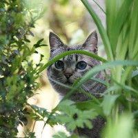 Epic Hausmittel Katzen vertreiben Garten Kaffeesatz Als Kaffeetrinker hat man eh Kaffeesatz im