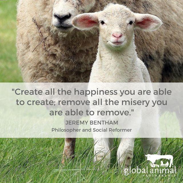 Pinterest Animal Quotes: 9 Best Animal Welfare Quotes Images On Pinterest