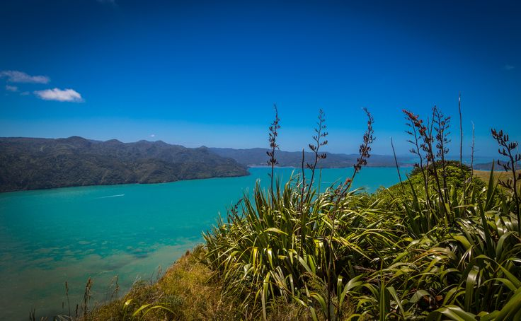 Hot, sunny Summer day on the Manukau Heads, Auckland New Zealand. Purchase a print, cards, or a full size digital file of this image at www.kirkvogel.com