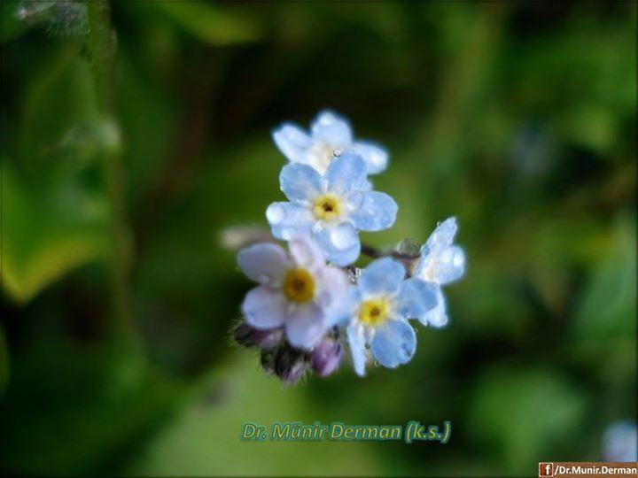 Seher vakti bir yel eser. Bu yelde bir şeyler gizlidir. Birçok şeyleri, sırları perdeler. Birçok işler görür. Kırmızı ile siyah arası renkte bir gül vardır. Kır çiçeği mine vardır. Kır menekşesi vardır. Kır menekşesinin koyu pembe ve mavi renkte olanı vardır. Buradaki mavisidir. Birde bir ot...  www.muhteva.com ziyaretinizi bekleriz.