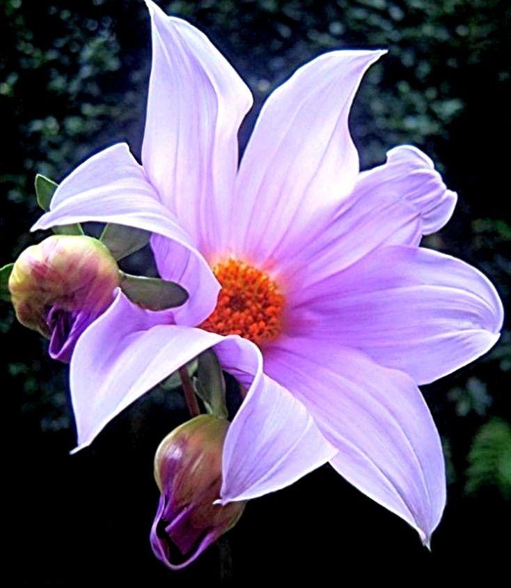 системе шин флерделис фото цветка времена изменились, теперь