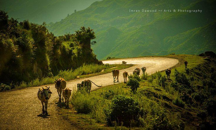 Banjosa Lake, by Imran Dawood