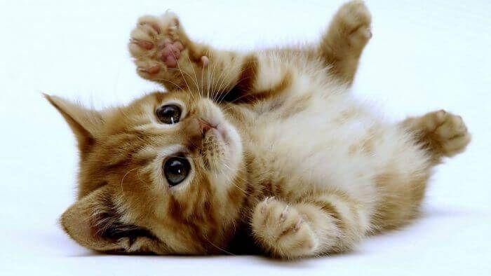 Vidéo : chats et chiens