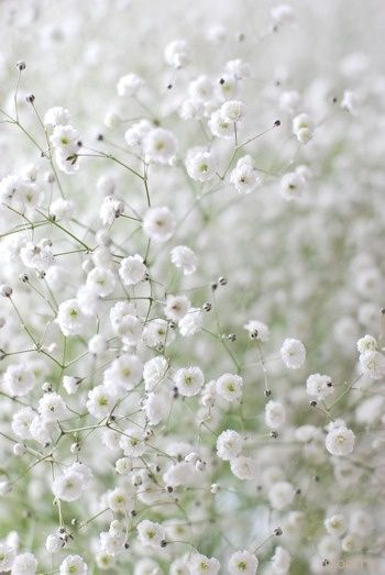 Find This Pin And More On Fleurs Verdures Graminées