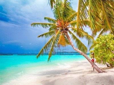 Coconut Palm Tropical Beach With White Sand Royalty Free Stock Photo, Pictures, Images And Stock Photography. Image 15634540.