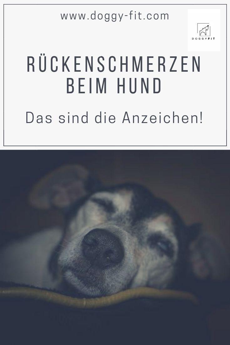 Ruckenschmerzen Beim Hund Das Sind Die Anzeichen Hunde Hundegesundheit Gesunde Hunde