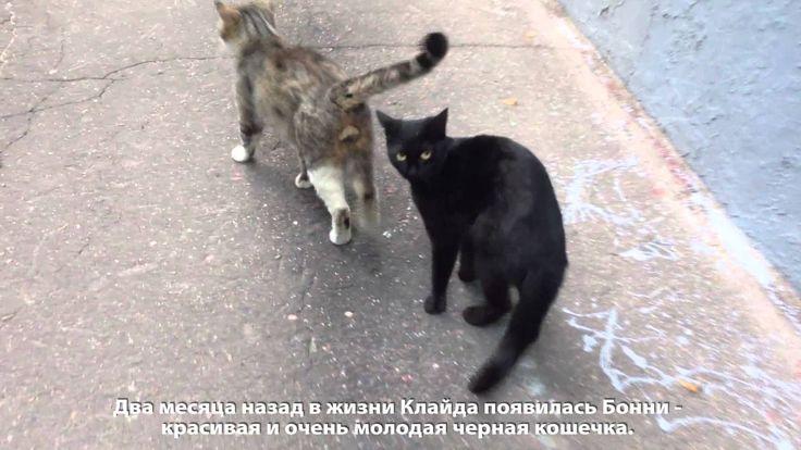 CATS LOVE STORY - БОННИ И КЛАЙД - КОШКИ - МОСКВА - 2014 - Cats&DogsTV - ...