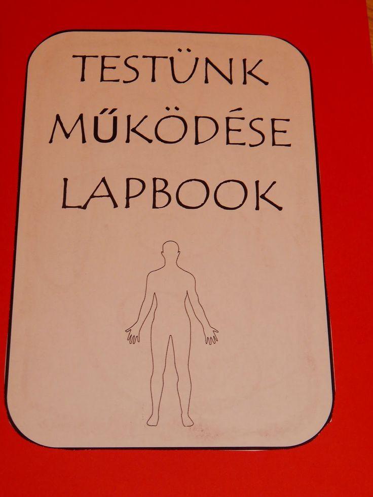 Testünk működése lapbook