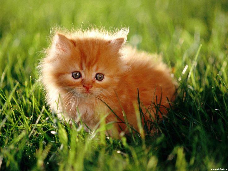 Смешные кошки :)  Часть 156 - 30мин смеха))
