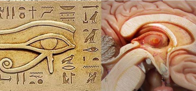 Третий глаз - шишковидная железа (эпифиз) | Блог Sage | КОНТ