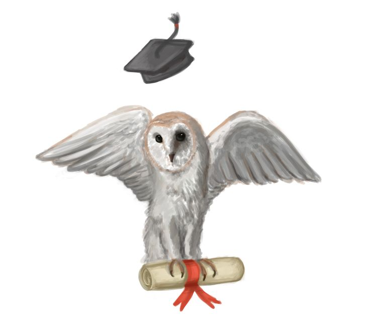 Graduation Owl Greetings Card