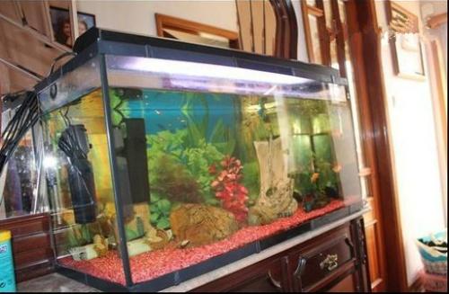 Aquario Completo + Peixes