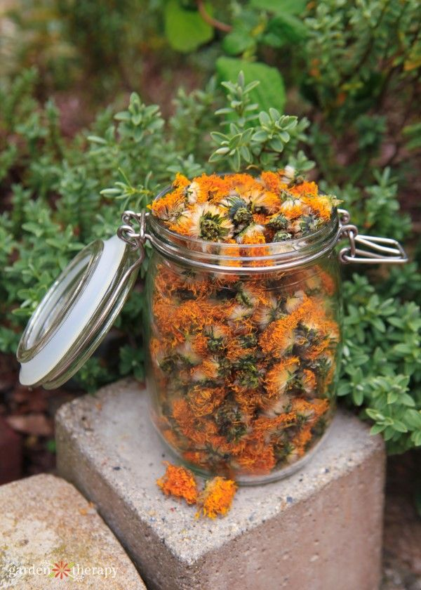 Common Garden Herbs For A Skin Care Apothecary Garden Therapy Herbal Oil Growing Herbs In Pots Herbalism