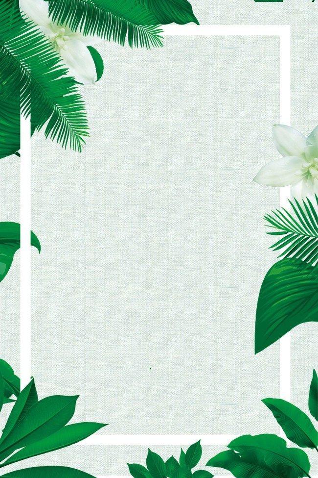 árbol Palma Planta Tropical Fondo Ideas De Fondos De Pantalla Fondos De Pantalla Verde Fondos De Pantalla De Iphone