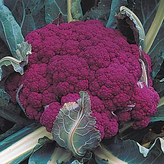 I want to grow this! Goes with my purple theme for the 2012 veggie garden. Graffiti Cauliflower
