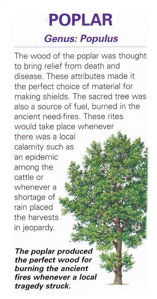Tree Lore - Poplar