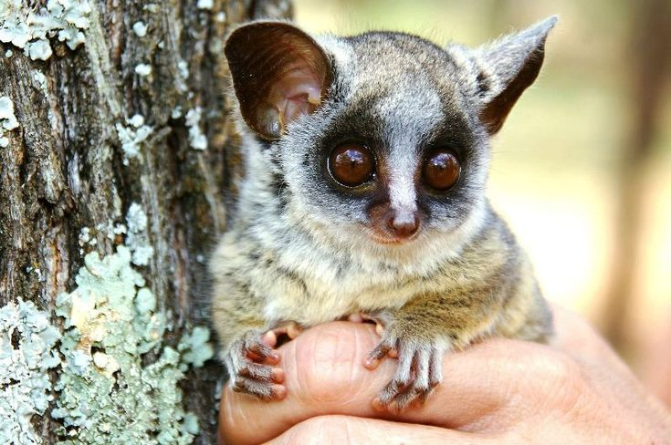 These cute exotic pets are ADORABLE! The 10 Cutest & Most ...