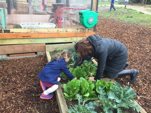 A recipricol learning community at Midlands Kindergarten -