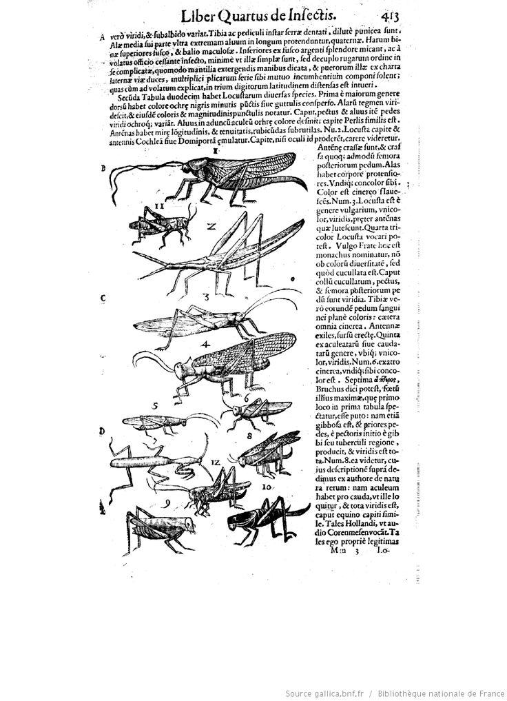 De animalibus insectis libri septem, cum singulorum iconibus... ([Reprod.]) / autore Ulysse Aldrovando,...