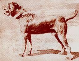 Мастино 1910