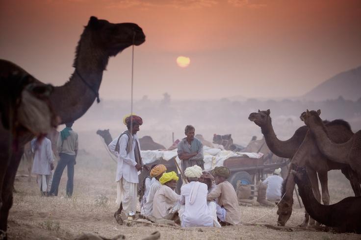 Sunset at Pushkar Camel festival