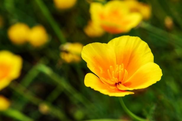 Yellow Annual Flowers Add luscious yellow to your garden beds and borders with annual flower picks for every season.