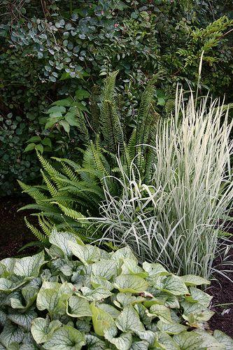 great plant combination--brunnera, ferns, grasses