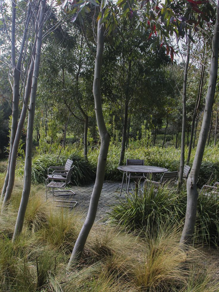 contemporary australian landscaping with native plants at musk cottage, flinders