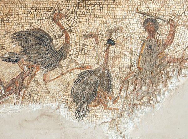 Villa Buc Ammera, Libya, Mosaic of the Gladiators. It offers important evidence for the way the ancient Romans organized gladiatoral contests in the circus. This section shows a fight against ostriches. The animals that were killed in the morning were preferrably exotic ones, and it is known that in the 70's of the first century, a man from Lepcis travelled all the way across the Sahara to look for unusual animals to be killed in the Roman arenas.