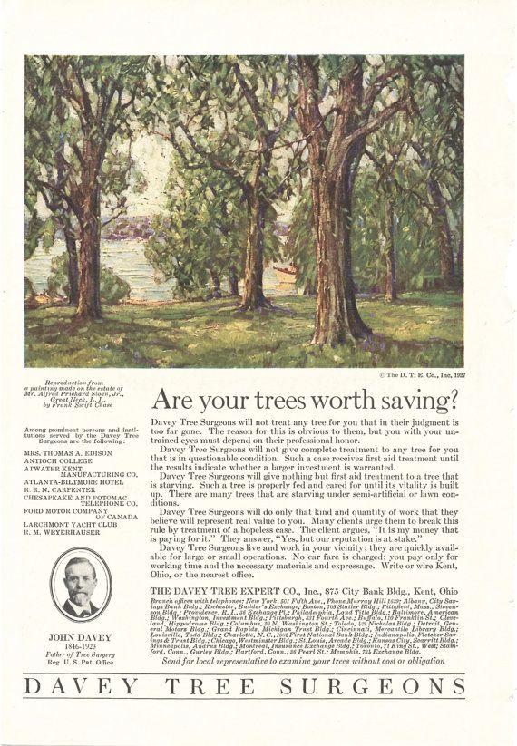Davey Tree Surgeons Vintage Ad Davy Tree by SunshineVintagePaper