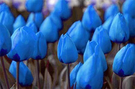 Flor Azul: Nomes, Significados, Tipos e Fotos de Flores Azuis                                                                                                                                                                                 Mais