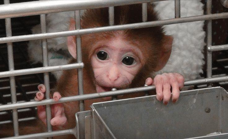 Psychology era animal welfare experiment