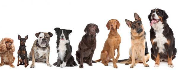 Nombres originales para perros según sus características