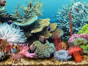 Google Image Result for http://www.scenicreflections.com/ithumbs/tropical_fish_aquarium.jpg