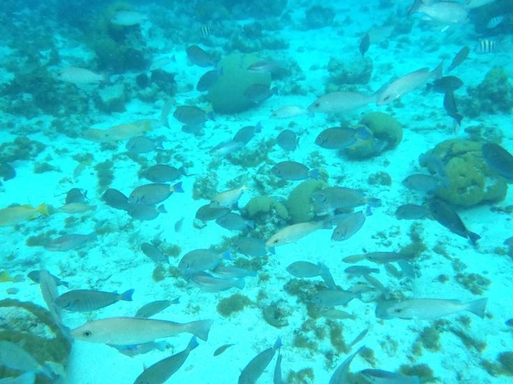 Aquarium San Andres Island (Colombia)