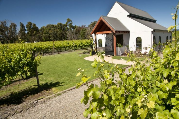 Sun and Sauv Grapes = perfect wedding ceremony at Immerse