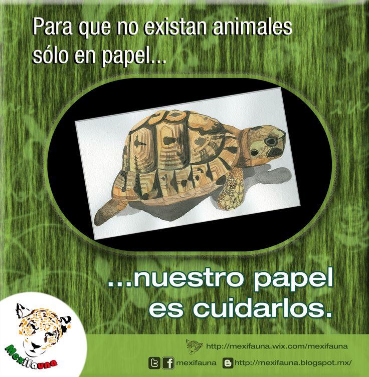 Para que no existan animales sólo en papel... NUESTRO PAPEL es CUIDARLOS.