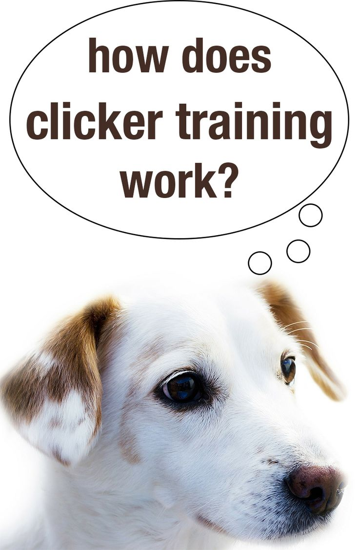 Find out how clicker training works and how it can help you train your dog