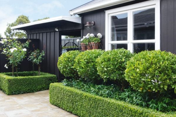 A clipped row of kumquats – underplanted with orange blossom-scented Murraya paniculata – provides a steady supply of ...