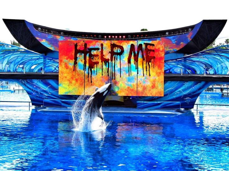 Anti captivity. Orcas DO NOT BELONG IN CAPTIVITY!! I don't get why anyone would want to torture one of these animals!! There is a better place to see them. Where they're happy and free. That place is the wild where orcas belong!