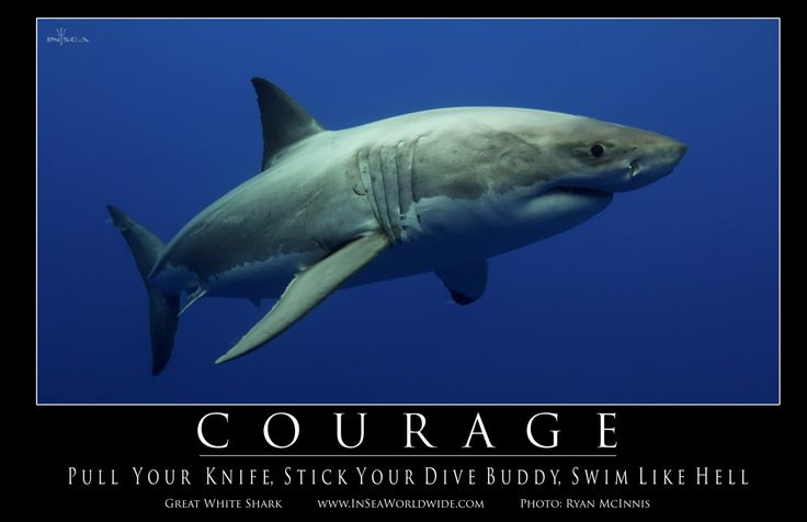 Courage: Swim Like Hell #shark #motivation #courage | IN ...