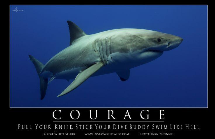 Courage: Swim Like Hell #shark #motivation #courage