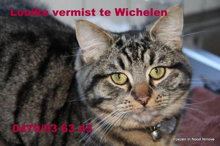 Lowieke vroeger Janneke van bij ons in opvang is al een week vermist te Wichelen. Hij zou nu bijna 1 jaar worden. Hij is gecastreerd en gechipt Wie hem gezien heeft kan telefoneren naar Gwendoline op het nummer 0479/03 63 43