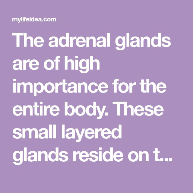 importance of adrenaline glands Cortisol and adrenal function cortisol is a very important steroid hormone that we can't live without it is made in the cortex of the two adrenal glands that sit atop the kidneys it protects us from all types of stress including infection, overwork, intense exercise, low calorie intake, and emotional stress.